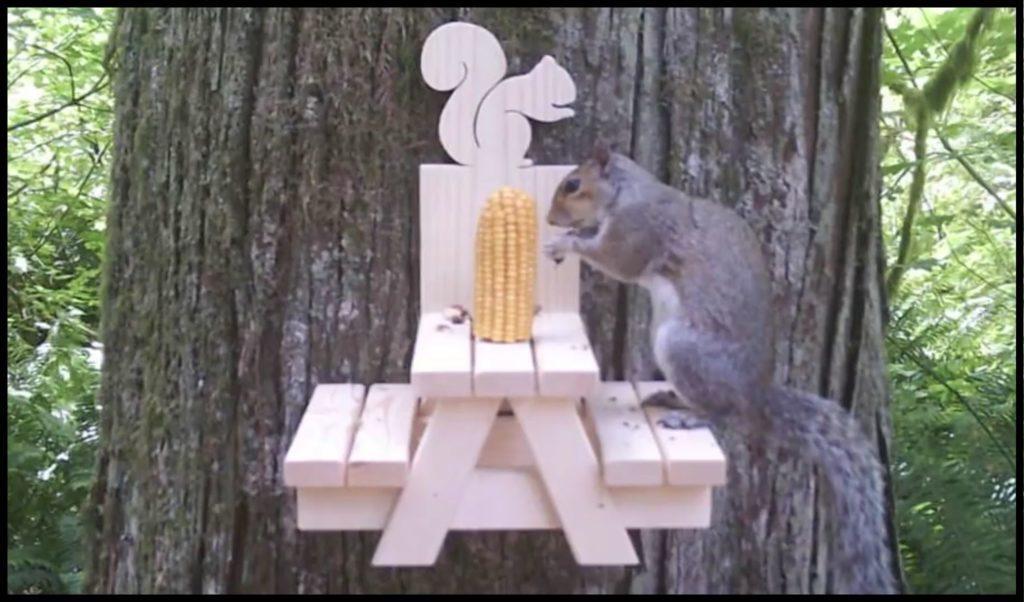 squirrel at squirrel picnic table